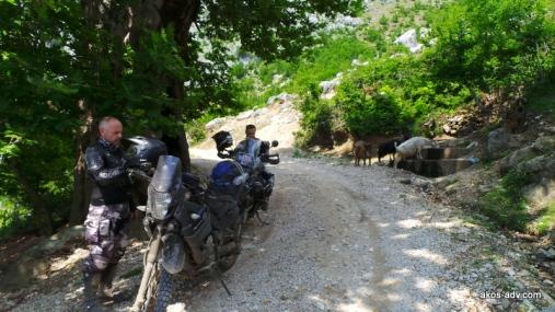 W cieniu pod wielkim platanem było miejsca dla kóz i dla nas