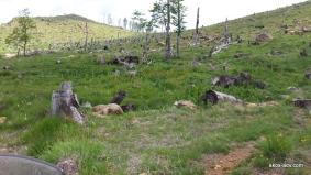 Spalone lasy w PN Lure